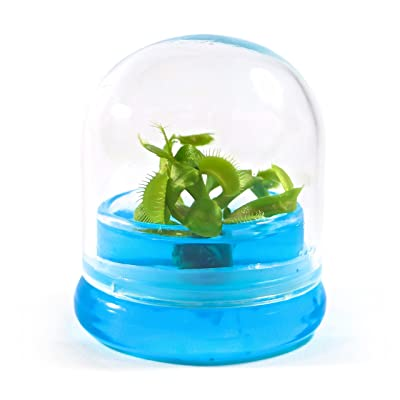 "BLOOMIFY Venus Flytrap Terrarium - Zero Care - 100% Growth Guarantee - 2.5"" Dome : Garden & Outdoor"