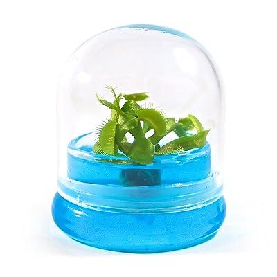 "BLOOMIFY Venus Flytrap Terrarium - Zero Care - 100% Growth Guarantee - 2.5"" Dome : Garden & Outdoor"
