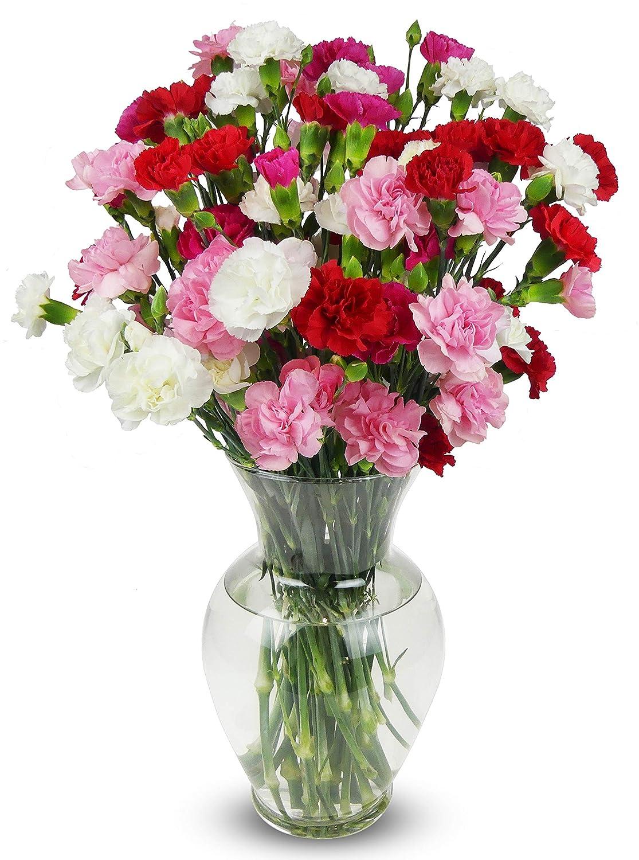 Benchmark Bouquets 20 stem Rainbow Mini Carnations, mit Vase (Fresh Schnitt Flowers)