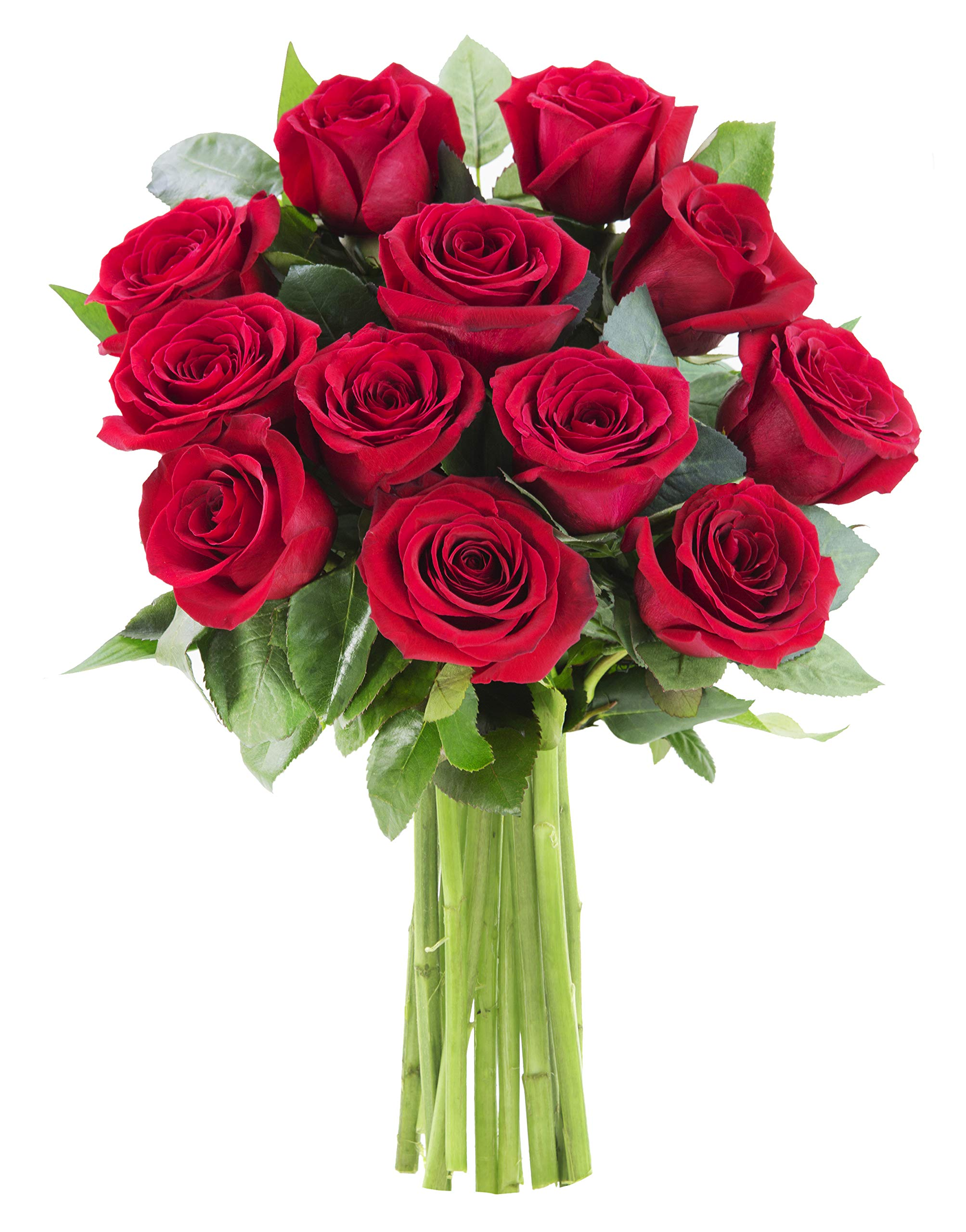 KaBloom The Romantic Classic Bouquet of 12 Fresh Red Roses (Farm-Fresh, Long-Stem) by KaBloom (Image #2)