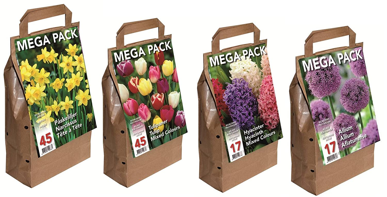 Hyacinths Big Buy Value Pack / Mixed Colours (Packs of 17) Greenbrokers Limited