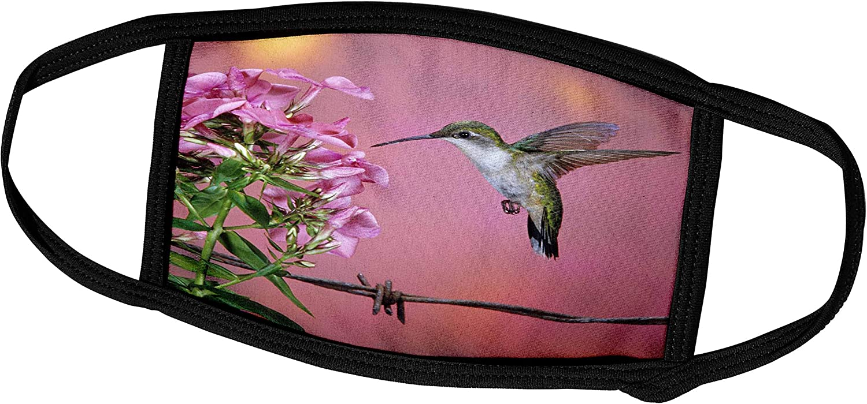 3dRose Ruby-Throated Hummingbird Female at Garden Phlox - Face Covers (fc_250975_3)
