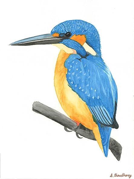 Amazon Com Kingfisher Original Dipti Choudhary Fine Art