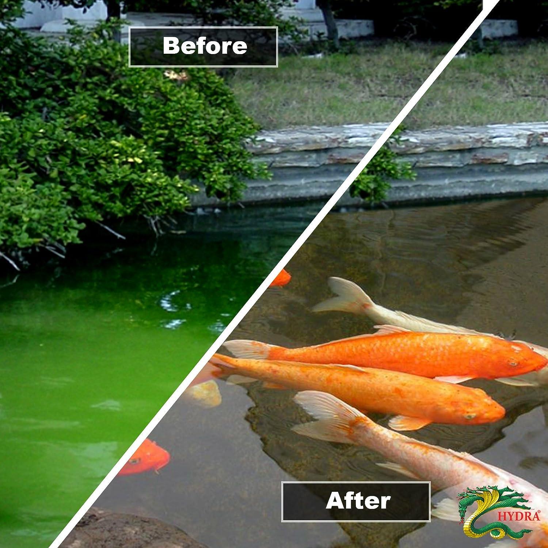 Green Algae Pond Algae Green Water Treatment HYDRA CRYSTAL 1Kg