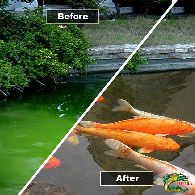 1 kg verde para estanques de tratamiento de agua Hydra Crystal Treats hasta 10.000 litros: Amazon.es: Hogar