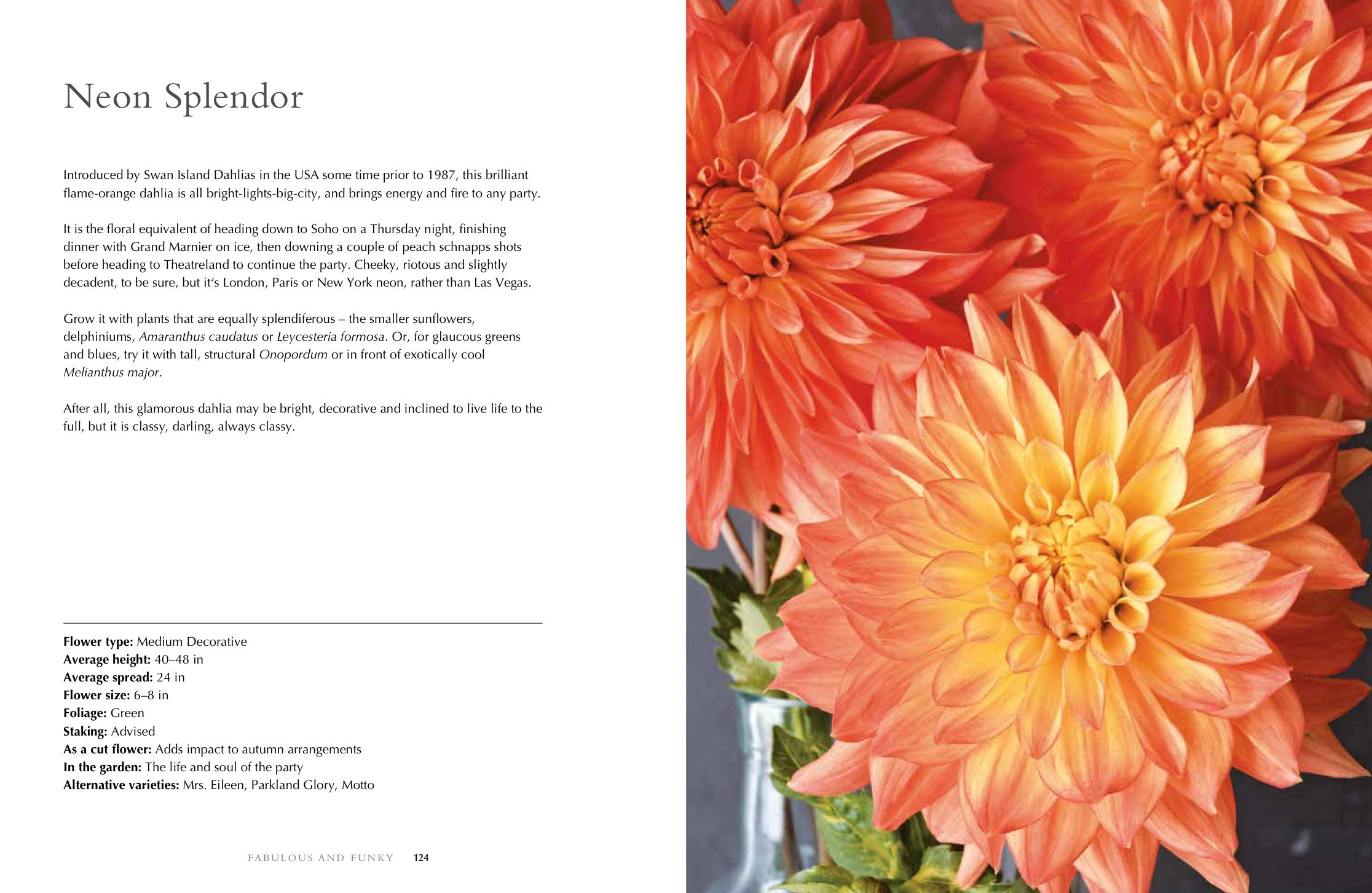 Dahlias Beautiful Varieties For Home And Garden Beautiful