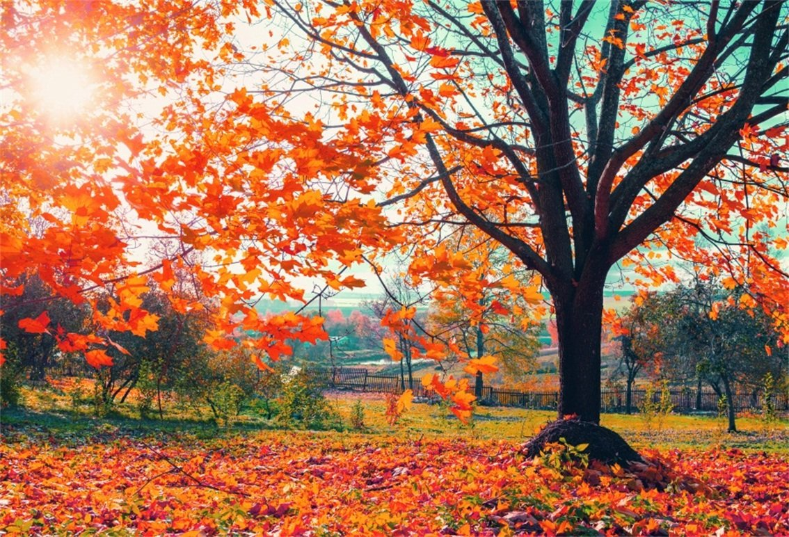 CSFOTO 7x5ft Background Autumn Forest Park Autumn Foliage Party Photography Backdrop Sunny Fall Red Maple Leaf Landscape Outdoors Holiday Travel Vacation Relax Tour Photo Studio Props Wallpaper