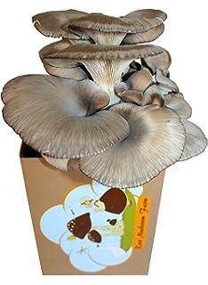 Amazon com : Root Mushroom Farm-Shiitake Mushroom Mini Farm