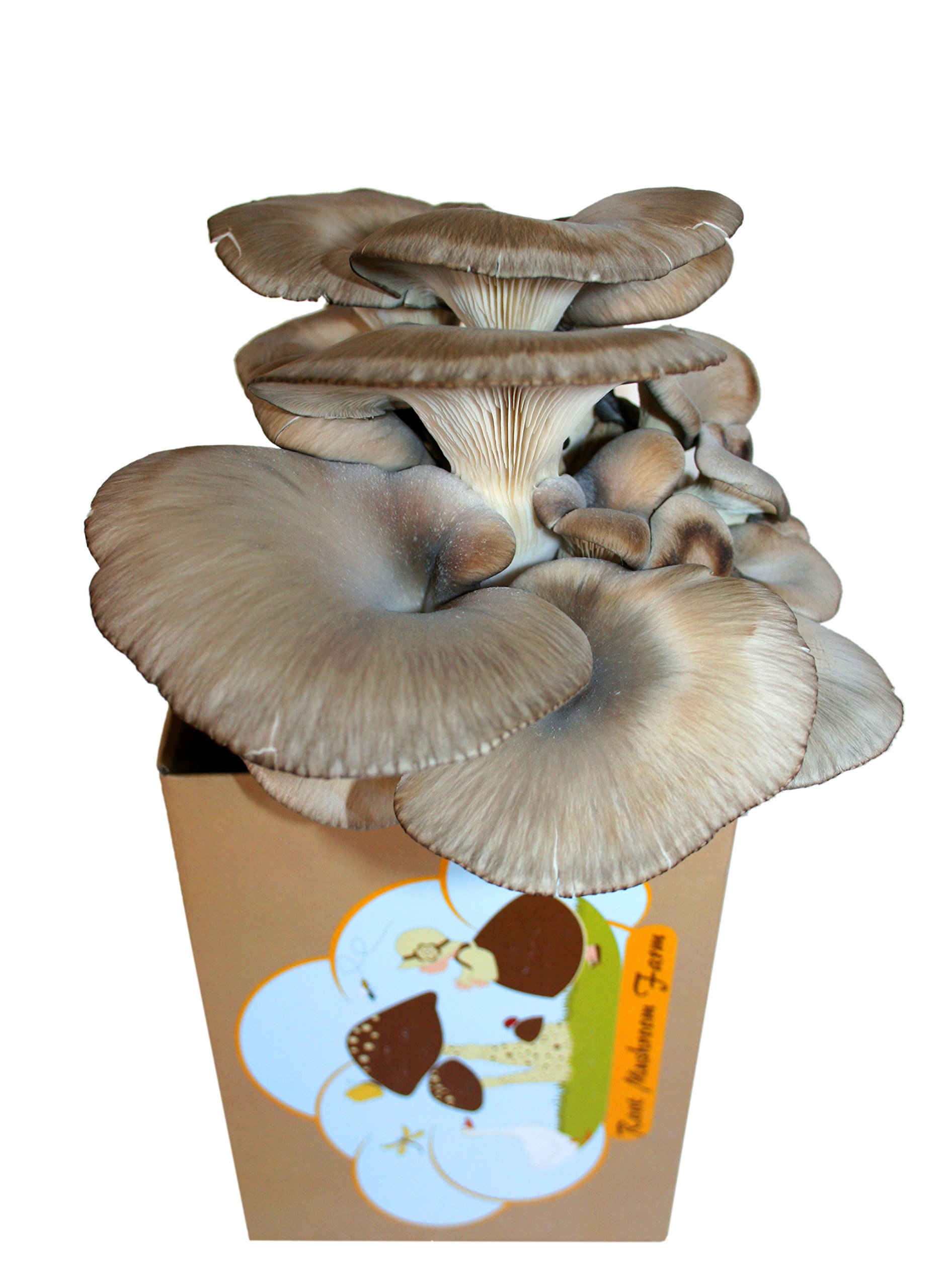 Root Mushroom Farm—Oyster Mushroom Growing Kit-3 pound log