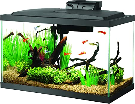 Aqueon Led 10-Gallon Nano Reef Tank