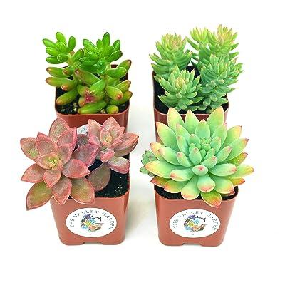 Set of 8-Small Cactus Memo Pad Randomly Picked
