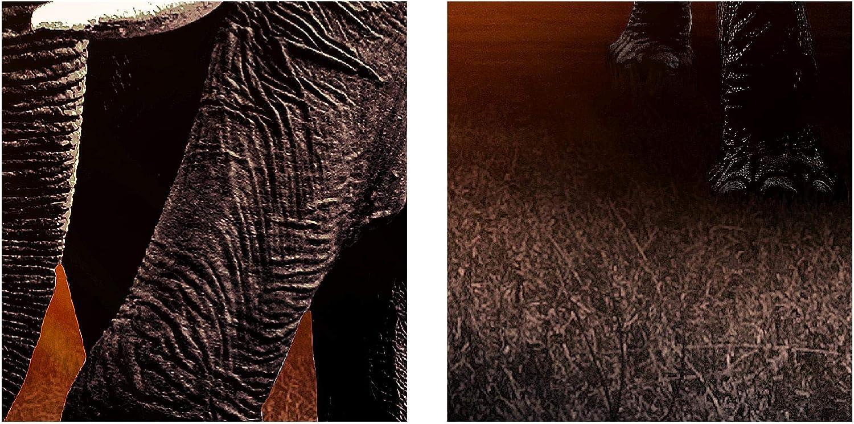 XXL Immagini Murale Stampa su Tela Decorazione da Parete Pronte per lapplicazione 5 pezzi 007651a Quadro Africa Elefante 200 x 100 cm