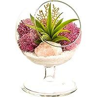 "Bliss Gardens Air Plant Terrarium / 4"" Round Glass Pedestal Stand/Choose Your Design"