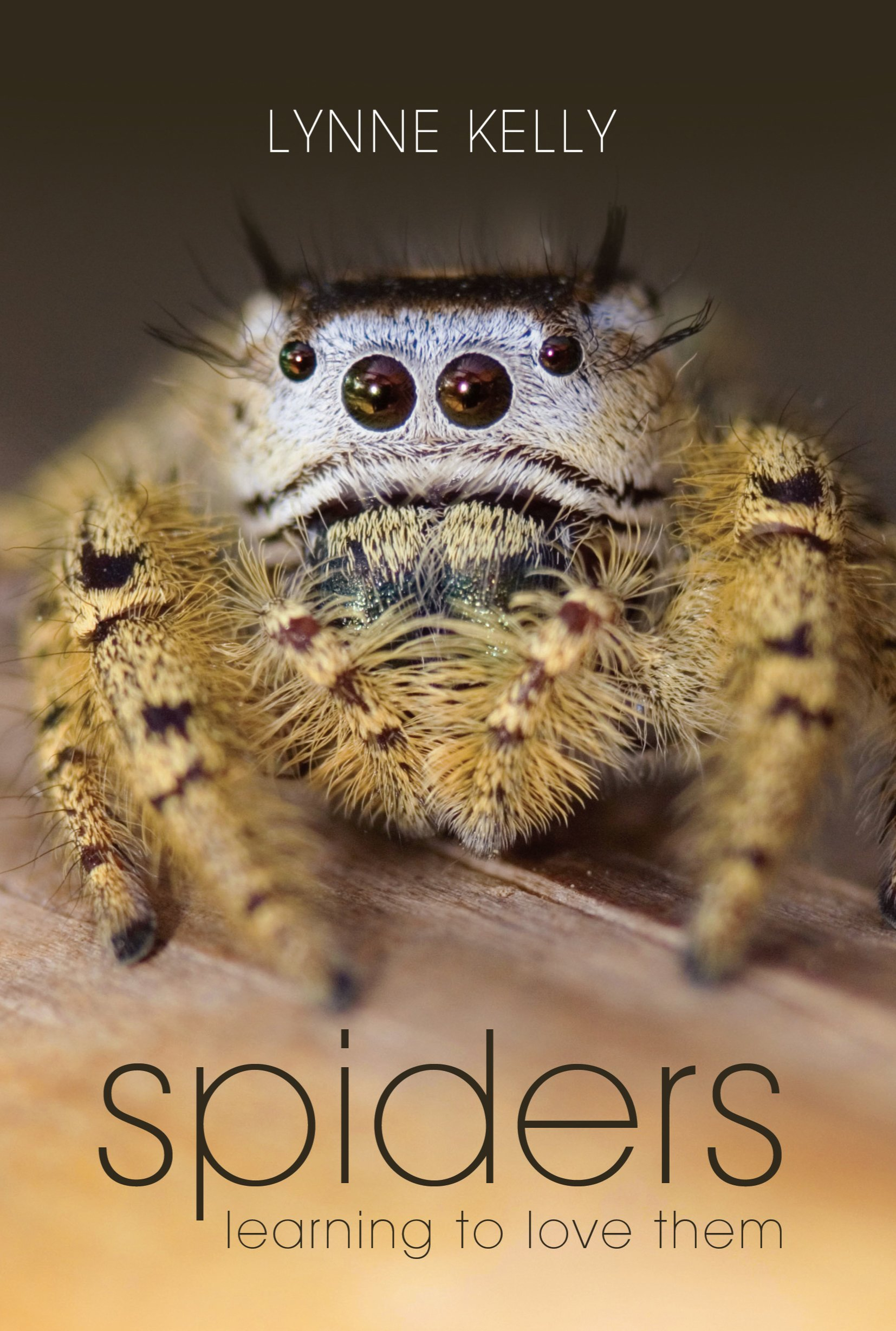 Read Online Spiders: Learning to Love Them PDF