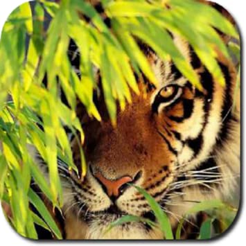 Amazon Tiger HD Wallpapers Appstore For Android