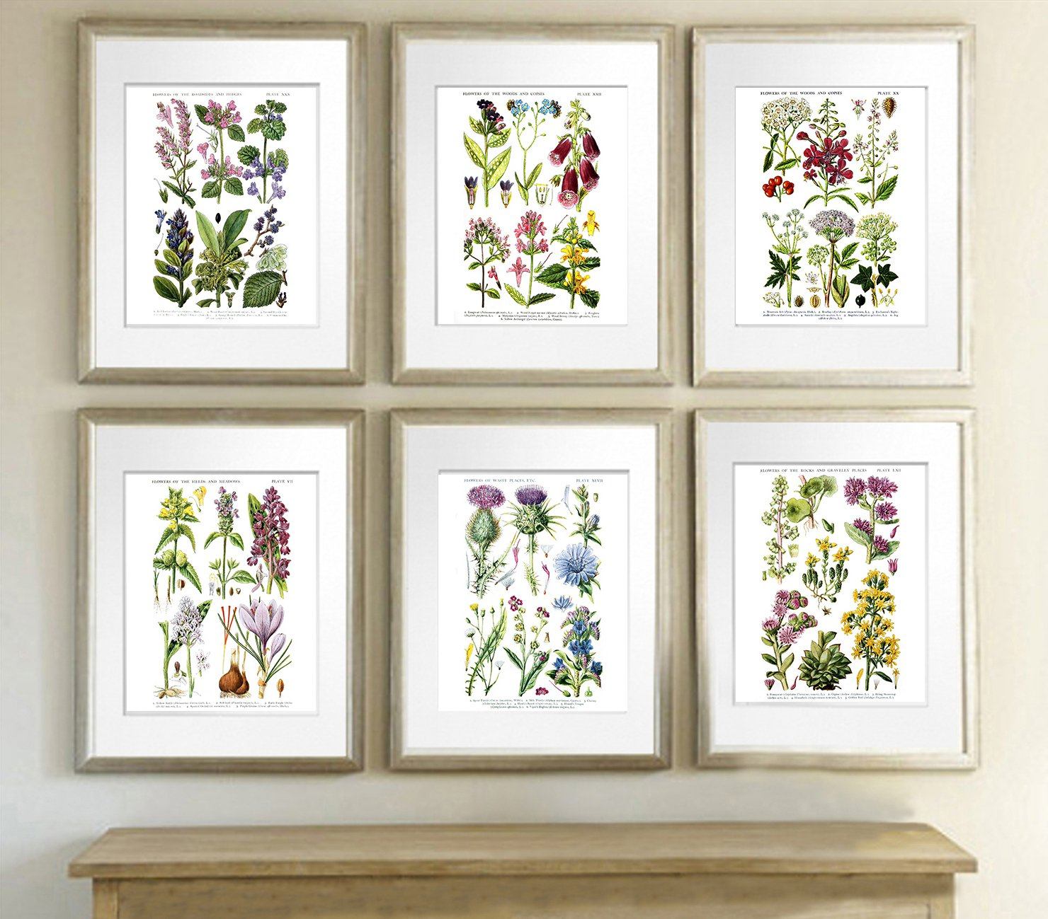 Amazon.com: English Wild Flowers Botanical Art Reproduction Unframed Set Of  Six Wall Art Prints: Baby