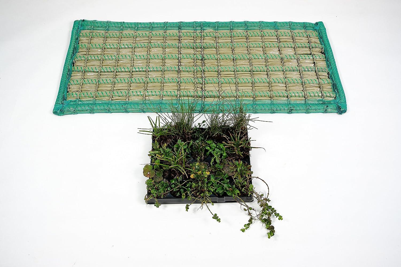 Pflanzinsel inkl. 20 winterharten Teich-Pflanzen, rechteckig, 125 x 55 cm – schwimmende Teichinsel mit Teichbepflanzung – Algen reduzieren in Koi-Teich durch Schwimmpflanzen auf Pflanzeninsel
