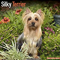 Silky Terrier Calendar 2019