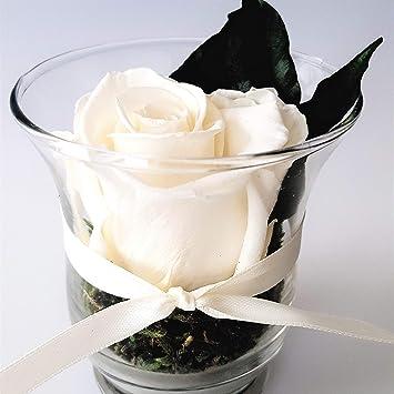 Rosen Te Amo Echte Rose Blumenarrangement In Der Vase Aus