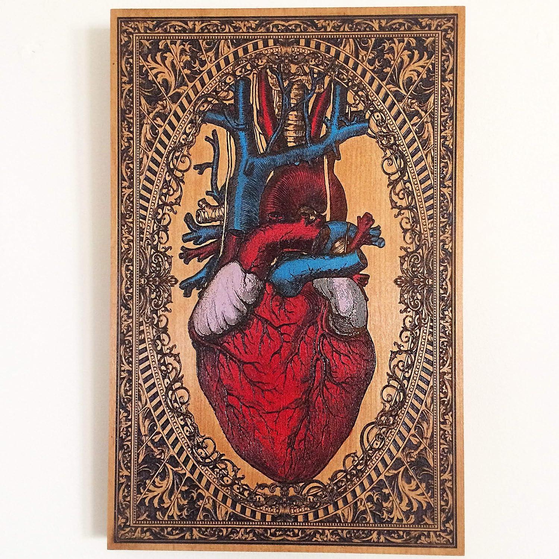 Amazon Anatomy Decor Anatomical Human Heart Art Deep Engraved