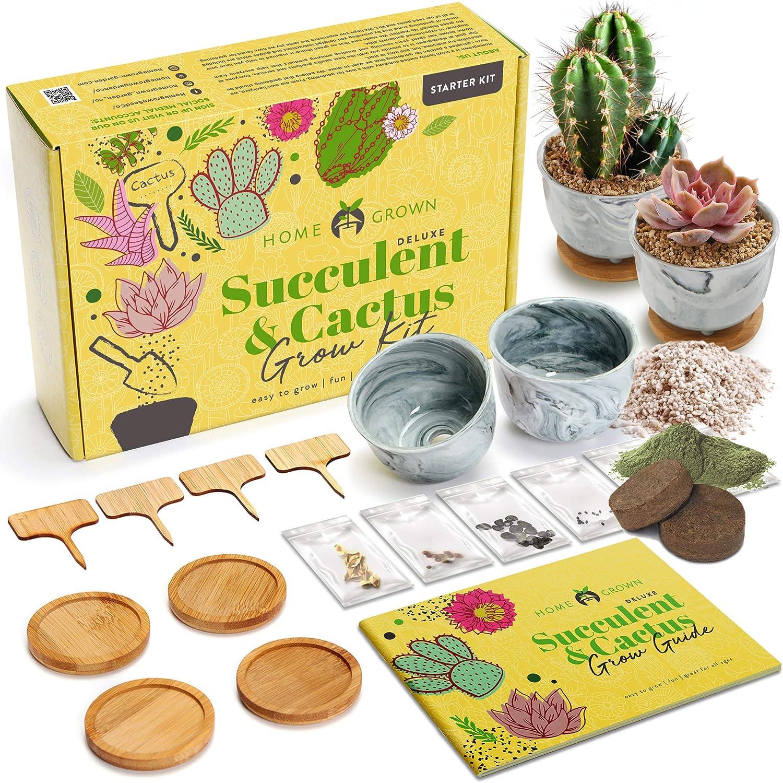 Potting Soil Water Drip Trays Complete Indoor Cactus /& Succulent Kit w//Cactus Seeds Ceramic Succulent Pots Grow Guide Deluxe Succulent /& Cactus Seed Grow Kit