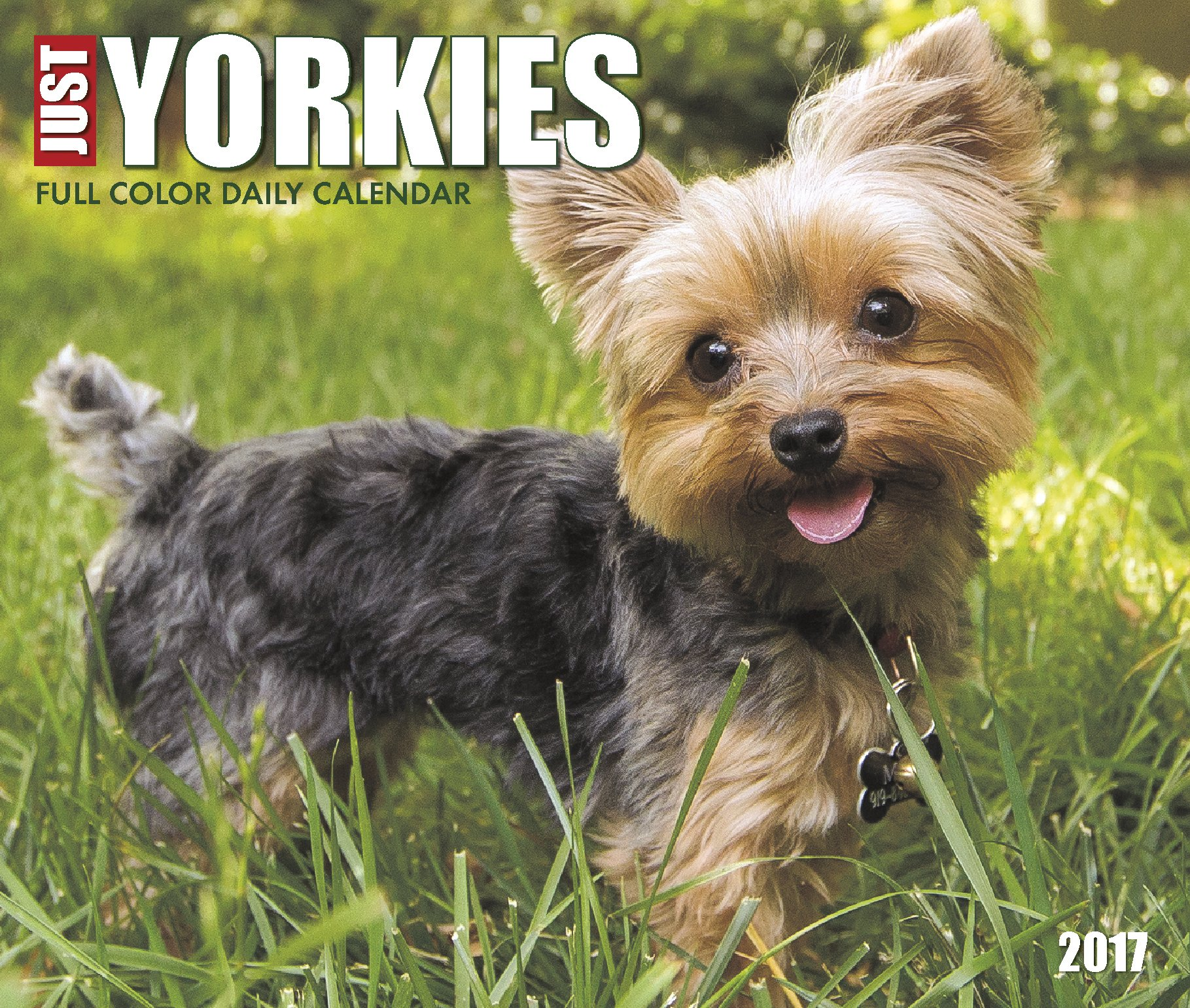 Just Yorkies 2017 Box Calendar Dog Breed Calendars Willow Creek