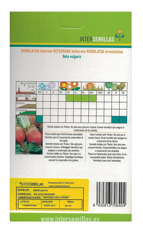 Semillas de Remolacha Forrajera Roja Paquete de 250g