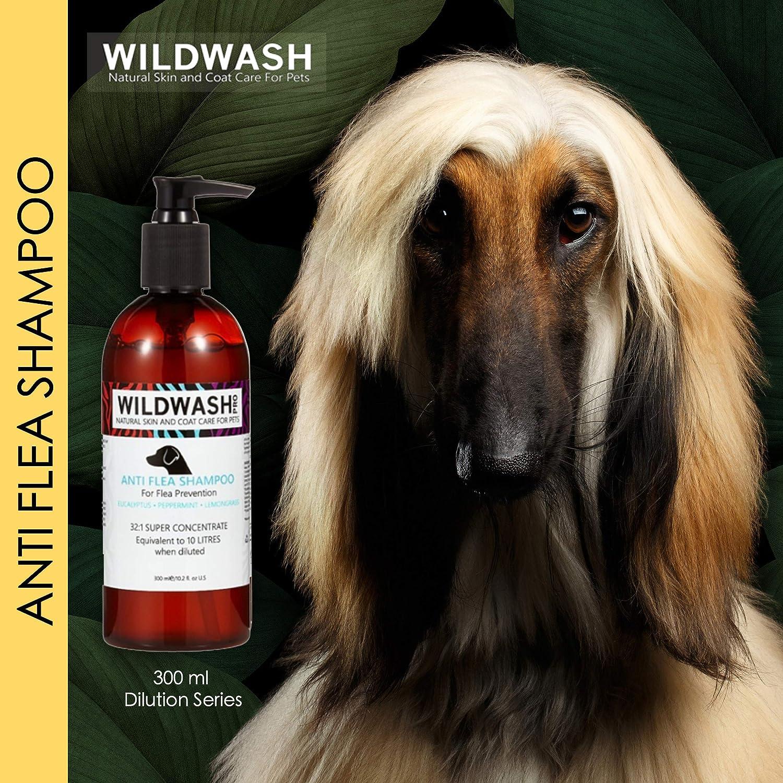 WildWash Champú antipulgas Pro, 300 ml: Amazon.es: Productos para mascotas