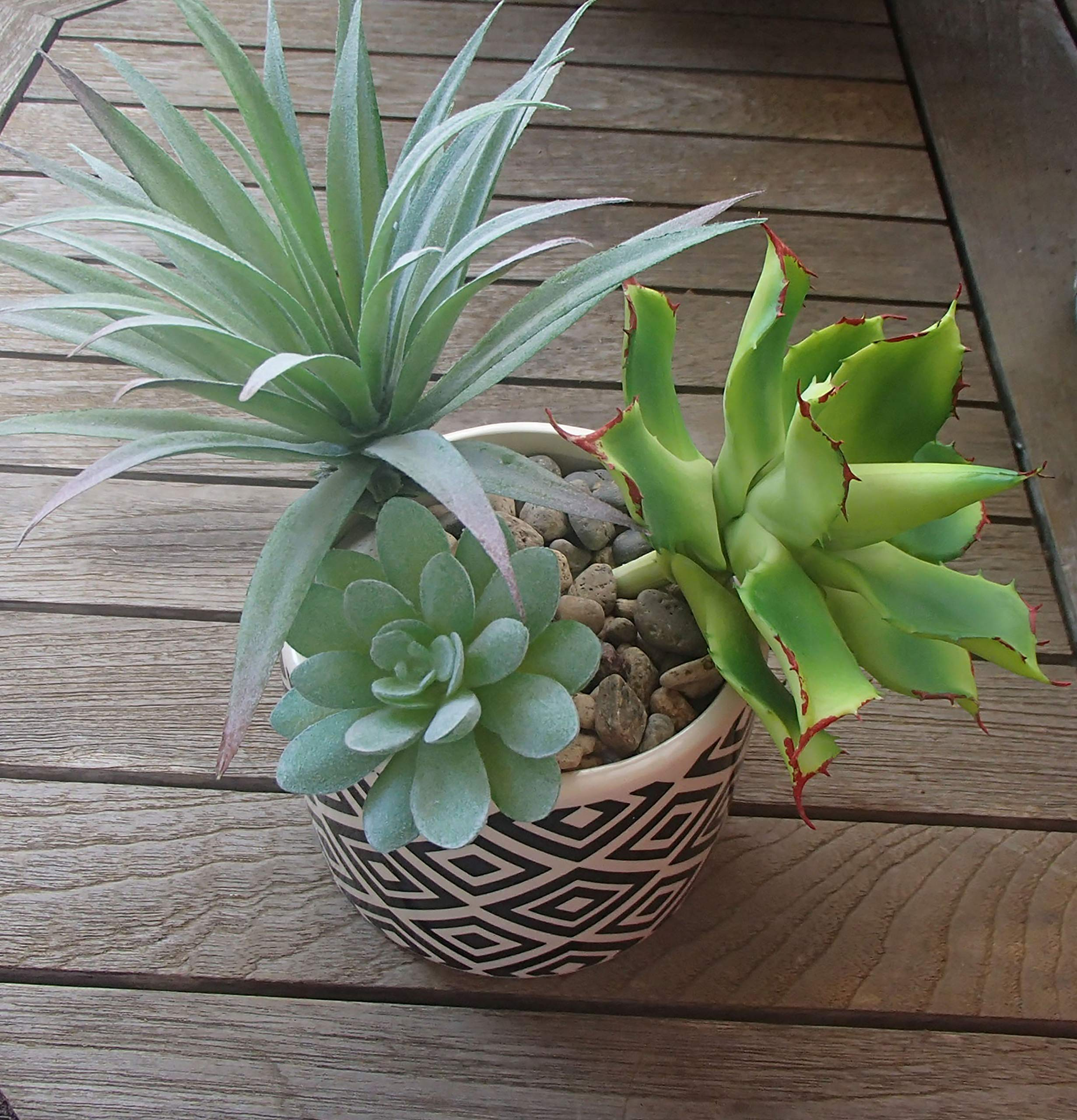 Daisy-Lane-6-Pcs-Artificial-Succulent-Arrangement-Unpotted-Fake-Succulents-in-Different-Sizes-Faux-Succulent-Plants-for-Floral-Arrangement-Home-or-Party-Dcor-Wedding-Centerpiece-or-DIY