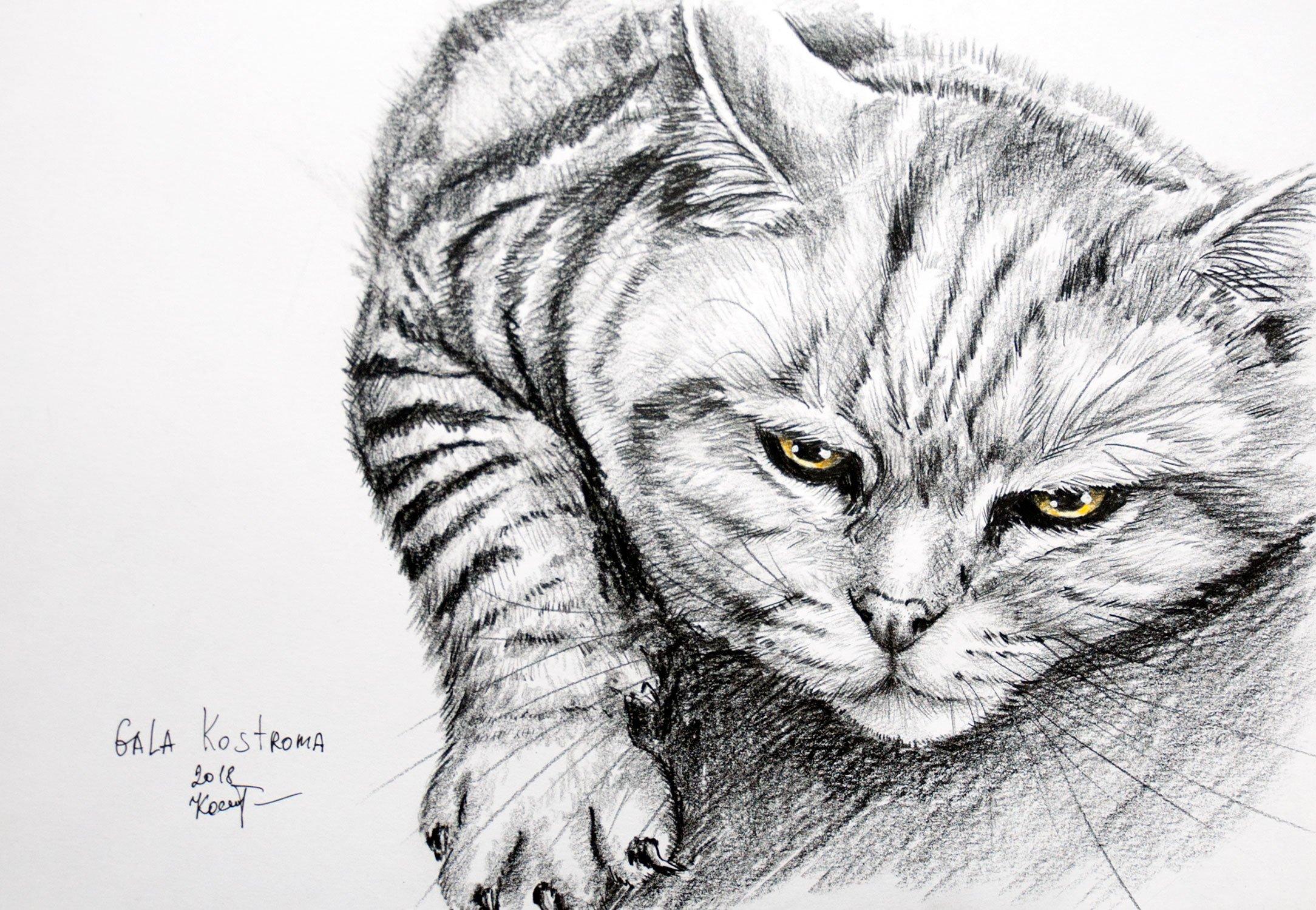 Pained original watercolor cat animal pet drawing