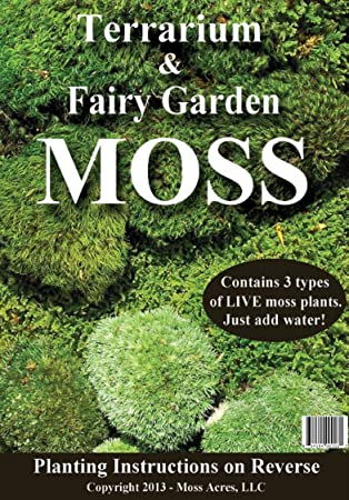 Amazon.com : Terrarium U0026 Fairy Garden MOSS : Moss Control Products : Garden  U0026 Outdoor
