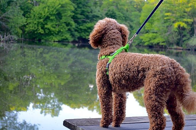 Dexdog EZharness - Arnés de paseo para perro de fácil colocación ...