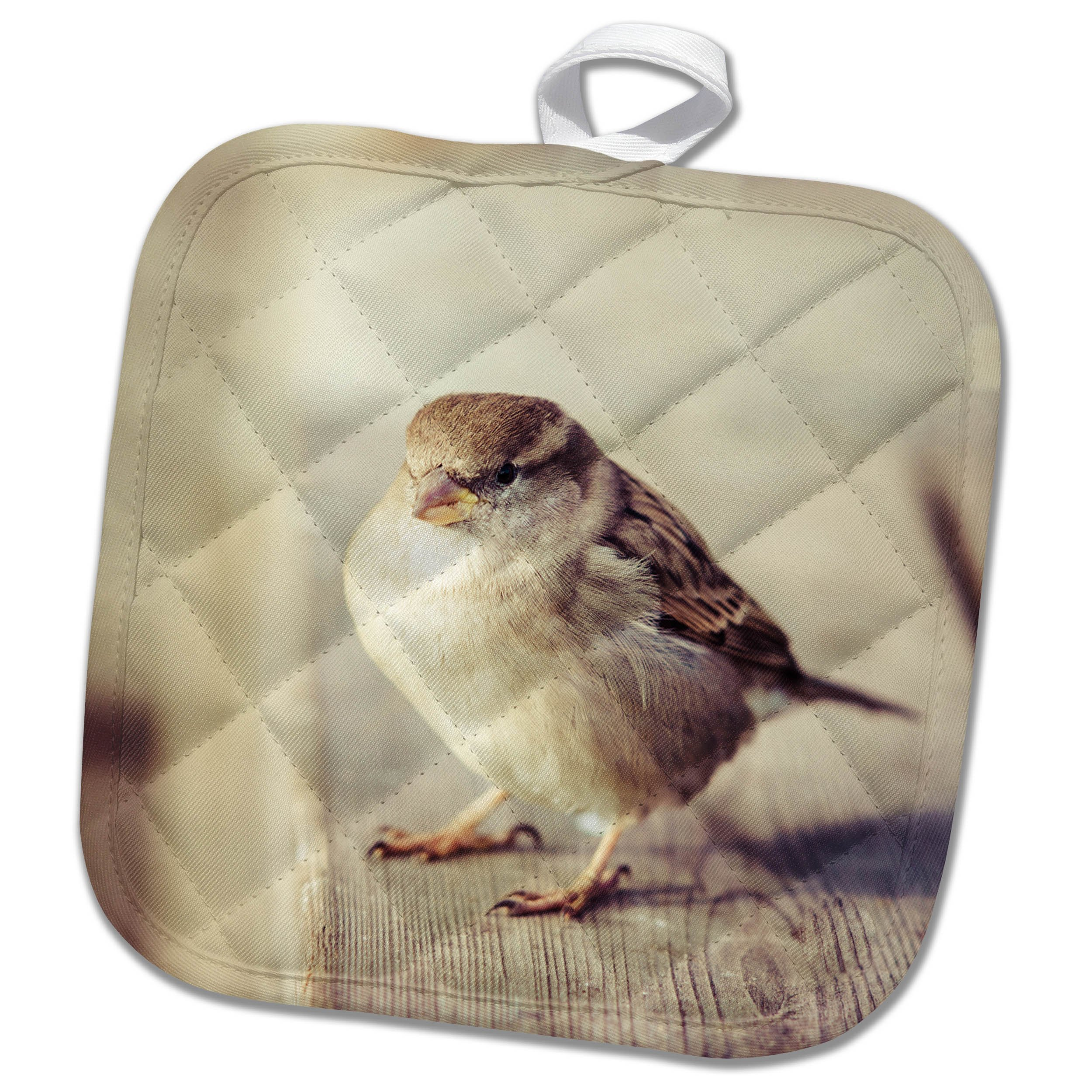 3dRose Alexis Photography - Birds - Calm sparrow looks at you with interest - 8x8 Potholder (phl_270249_1)
