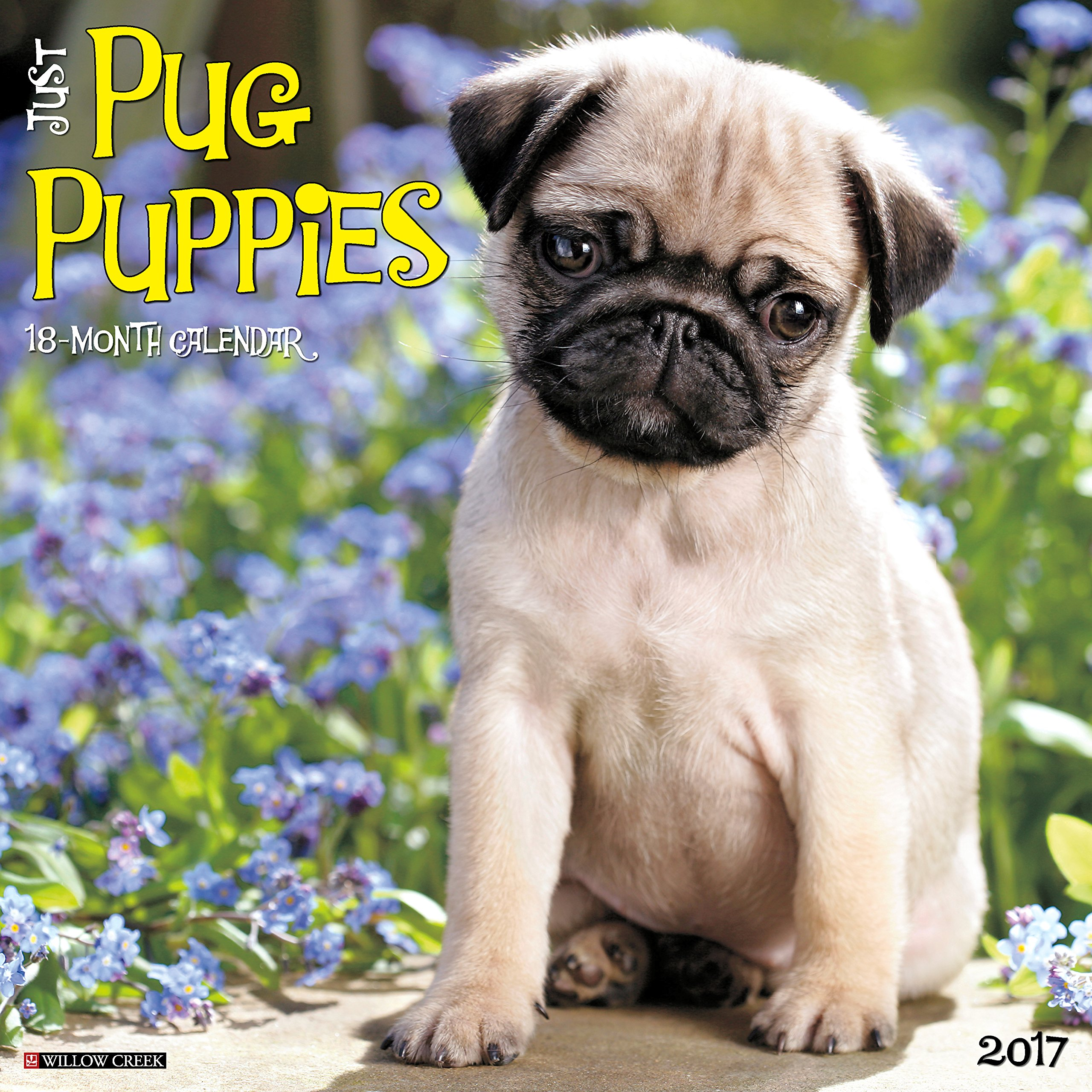 Just pug puppies 2017 wall calendar dog breed calendars willow just pug puppies 2017 wall calendar dog breed calendars willow creek press 9781682341742 amazon books nvjuhfo Images
