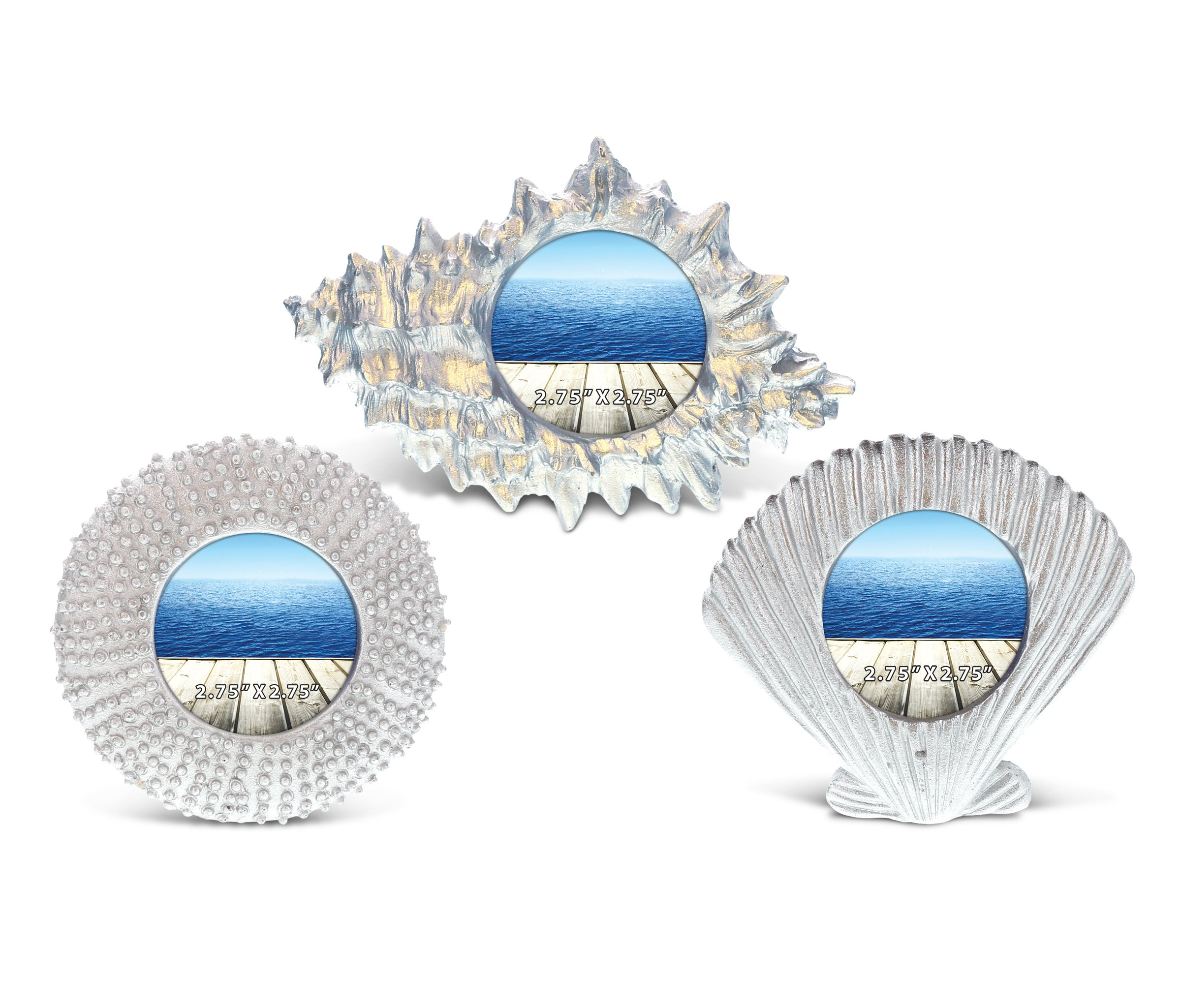 CoTa Global Silver Sea Shell Conch Inspired Photo Frames Nautical Handcrafted Resin Picture Holder Aquatic Ocean Life Animal Frame Memories Bright & Unique for Marine Themed Rooms Home Decor (3pc Set)