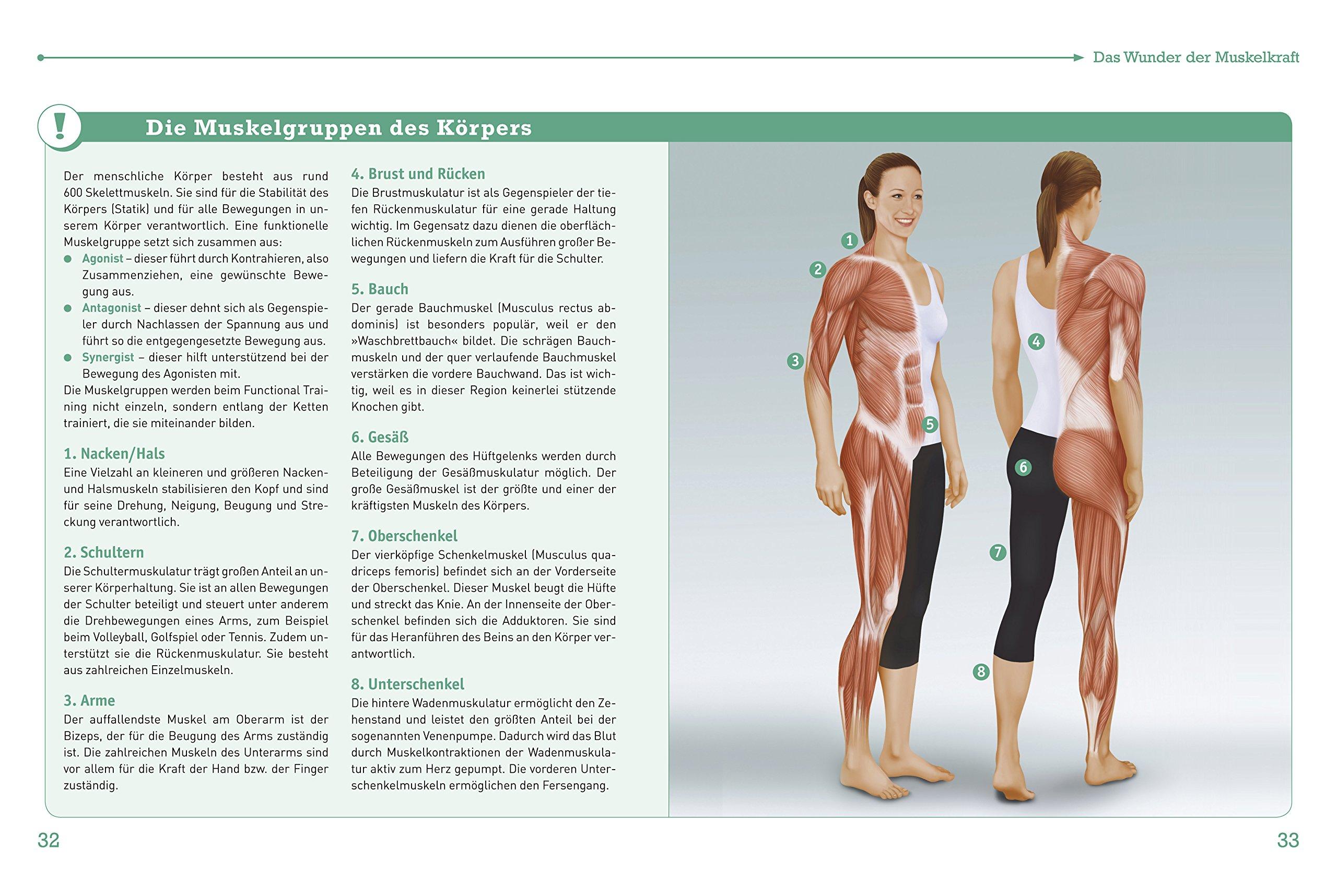 Nett Größte Muskel Im Körper Zeitgenössisch - Menschliche Anatomie ...