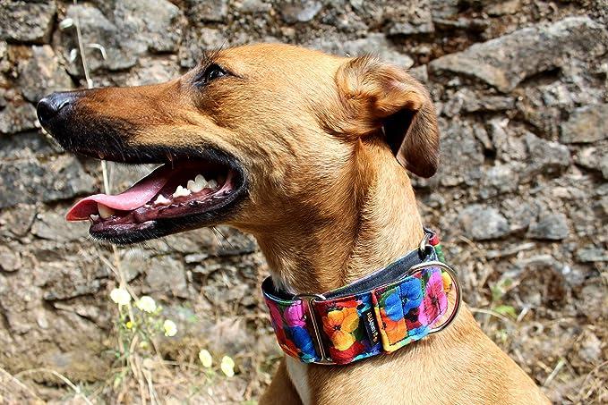 candyPet Collar Martingale Para Perros - Modelo Flores, L: Amazon ...