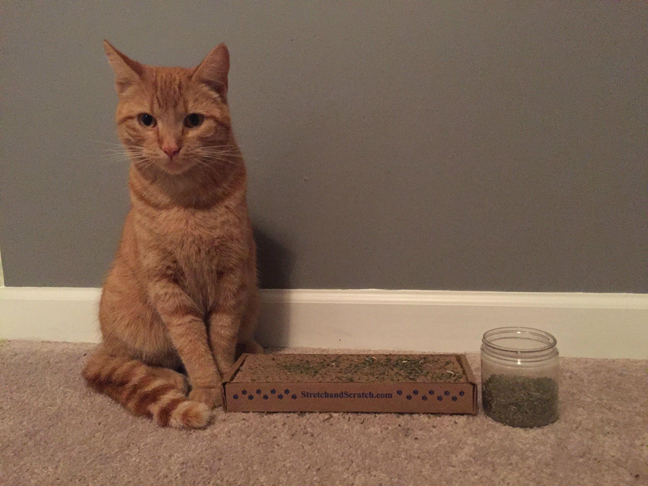 Garry's Pets Catnip - Our Maximum Potency Premium Blend Nip That Your Cats Will Go Crazy Over (20 Pound Carton)