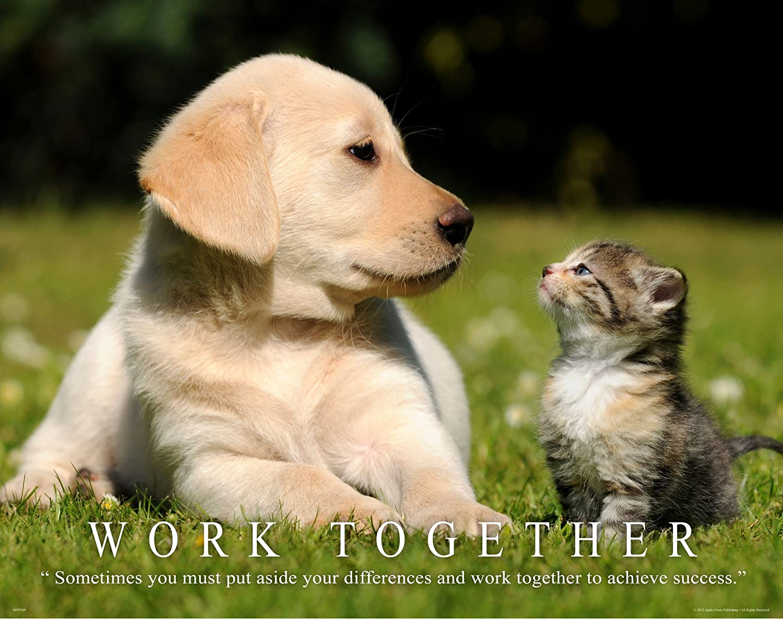 amazon com cat motivational poster art print 11x14 kitten puppy