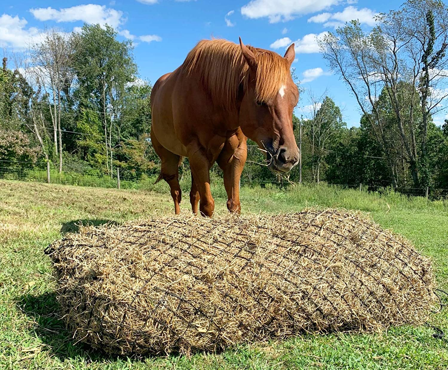 """Shires Extra Stong Deluxe Hay Net with 2/"""" x 2/"""" Openings for Slow Feeding"""