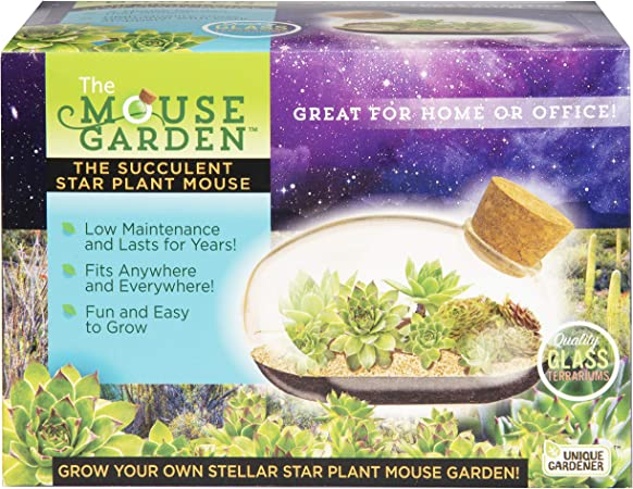 Amazon Com Grow Your Own Succulent Star Plant Mouse With Our