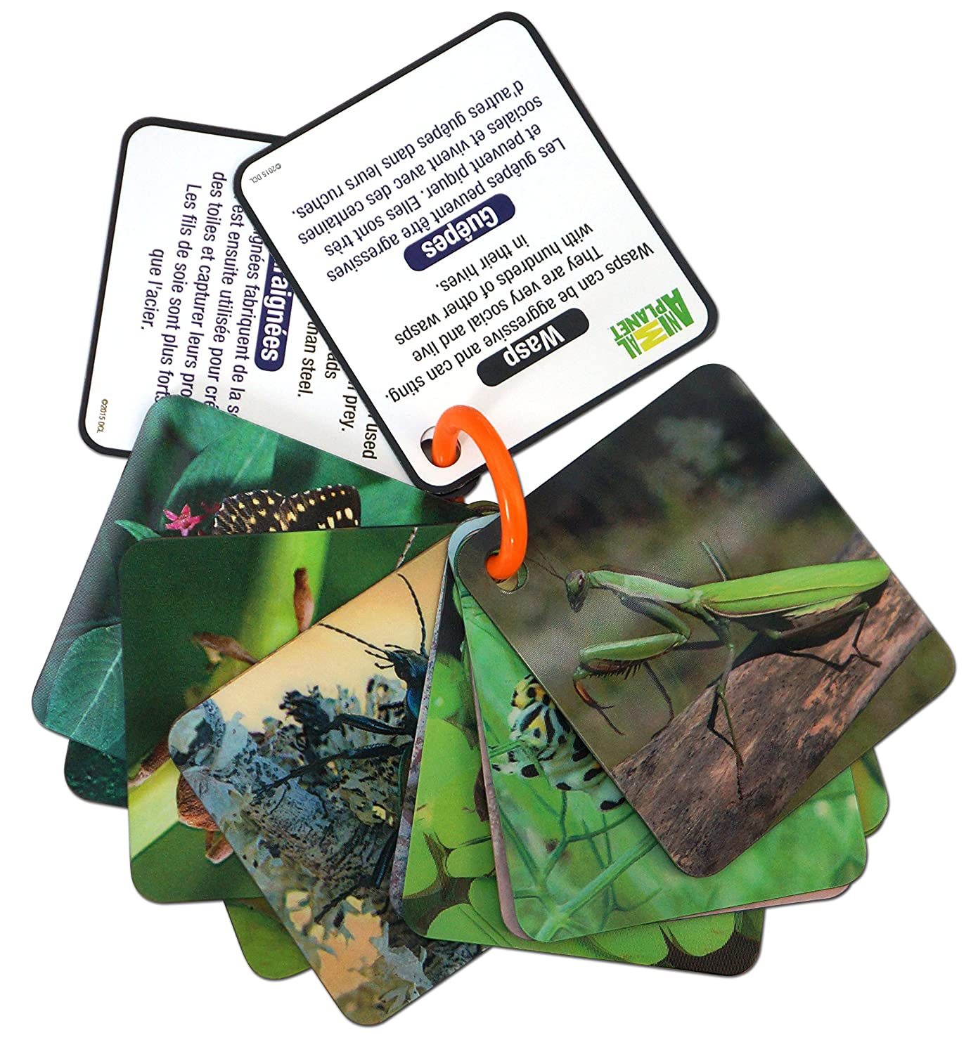 Animal Planet 3D Flash Cards Bugs