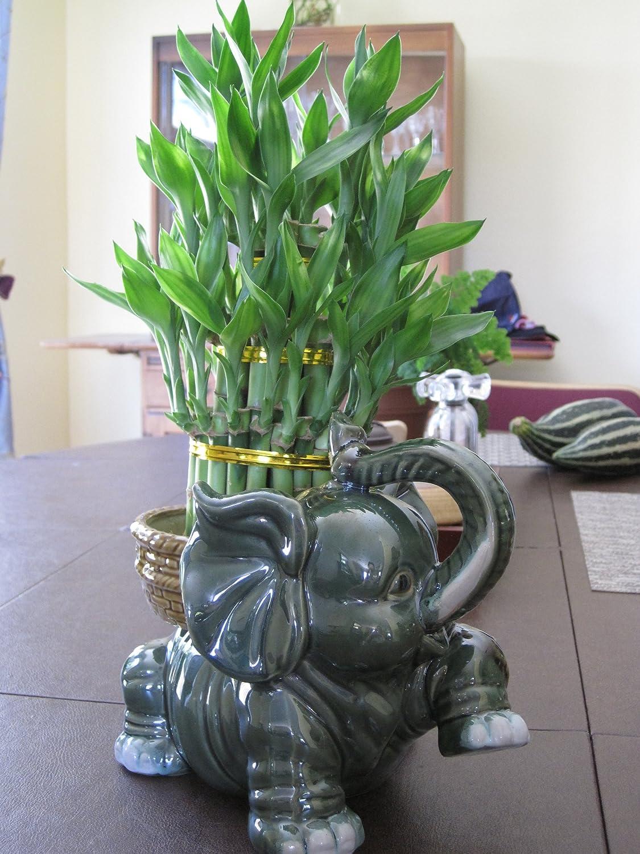 Amazon jumbo size elephant ceramic vase with 3 tier 4 6 8 amazon jumbo size elephant ceramic vase with 3 tier 4 6 8 quality lucky bamboo plant everything else reviewsmspy