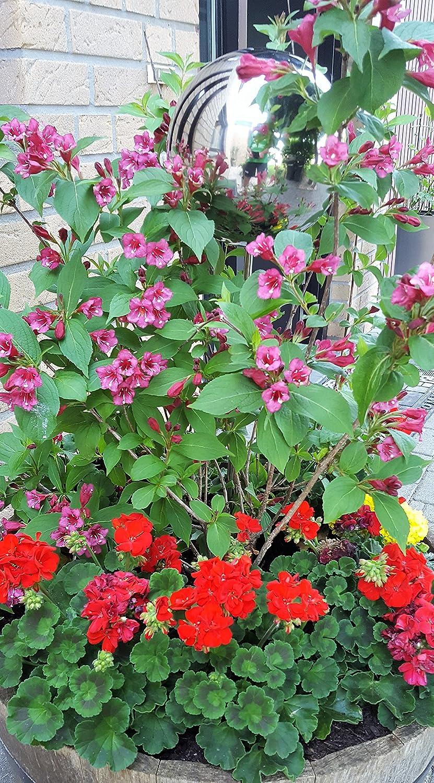 Rosenstab 80 cm 10 cm 10 cm garten-wohnambiente Beetstecker Rosenkugel Edelstahl//poliert