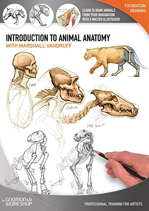 amazoncom introduction to animal anatomy marshall vandruff the gnomon workshop movies tv - Animal Anatomy Coloring Book