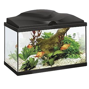 Askoll - Acuario con sistema de iluminación LED y filtro Aqua 20, negro, 40 x 20 x 31 cm, 17 litros: Amazon.es: Hogar