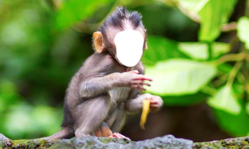 Macaco engraçado Montagem da foto: Amazon.com.br: Amazon