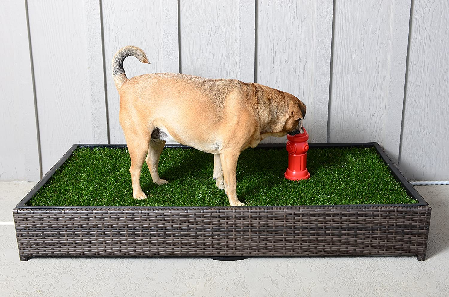 picture id dog porch potty large of