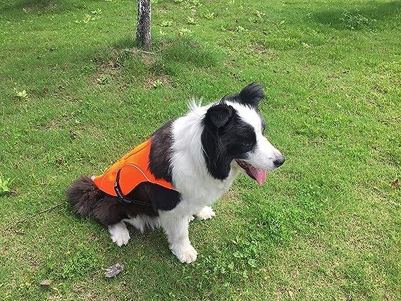 BINGPET chaleco de refrigeración para perro, chaleco de seguridad ...
