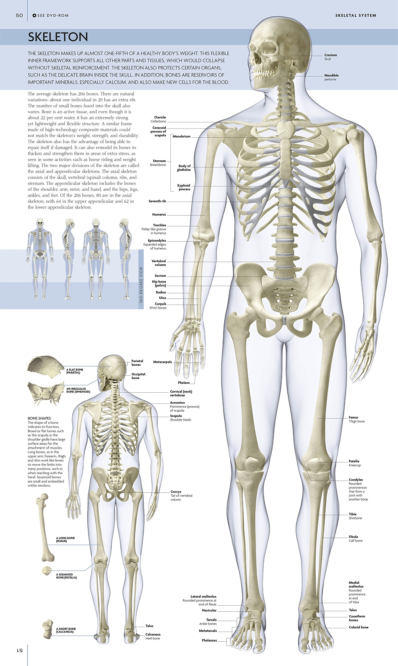 function of long bones in the body is to